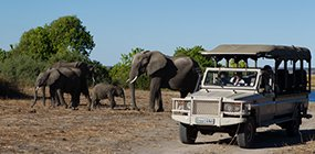 Chobe Game Lodge - Robert Mark Safaris - Luxury African Safaris